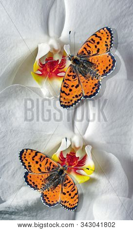 bright red butterflies and white orchid flowers. butterflies and flowers. colorful tropical background. spotted fritillary butterfly. stock photo
