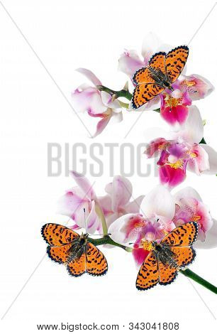 bright red butterflies and pink orchid flowers. butterflies and flowers. colorful tropical background. spotted fritillary butterfly. stock photo