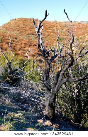 Charcoaled landscape including a burnt chaparral shrub caused from a past wildfire taken on an arid plain in the Cajon Pass, CA stock photo