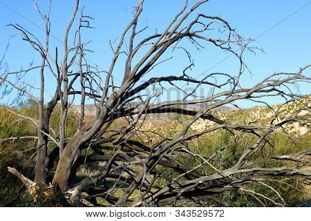Charcoaled landscape including a burnt chaparral shrub caused from a past wildfire on an arid plain taken in the Cajon Pass, CA stock photo