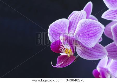 Beautiful flower to orchids close-up insulated on black background stock photo