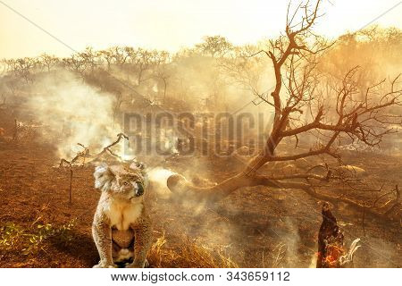 Composition about Australian wildlife in bushfires of Australia in 2020. koala with fire on background. January 2020 fire affecting Australia is considered the most devastating and deadly ever seen stock photo