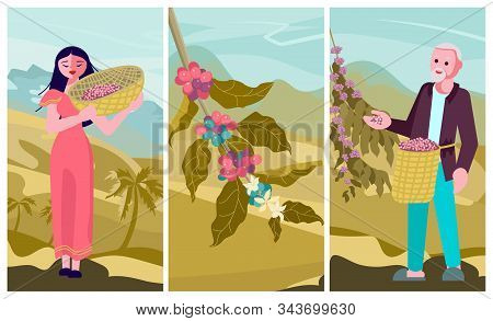 Asian male and female coffee farmer characters hold basket with mature coffee beans. Panoramic coffee plantation landscape. Branch with coffee beans and hills background. Flat Art Vector Illustration stock photo
