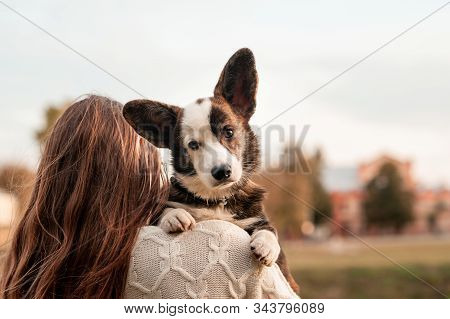 Portrait of young woman hugging her Welsh Corgi dog in the autumn park. yellow leaves background. Young female owner sitting with her dog in autumn leaves on red blanket plaid. stock photo