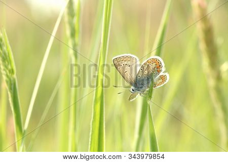 Blue Butterfly spring morning. Nature background Butterfly green grass meadow Nature background Macro Close-up Nature background summer Nature background sun sunshine Nature background Natural environment Nature background Butterflies Nature background. stock photo