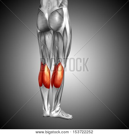 Concept or conceptual 3D illustration human lower leg anatomy or anatomical and muscle on gray background stock photo