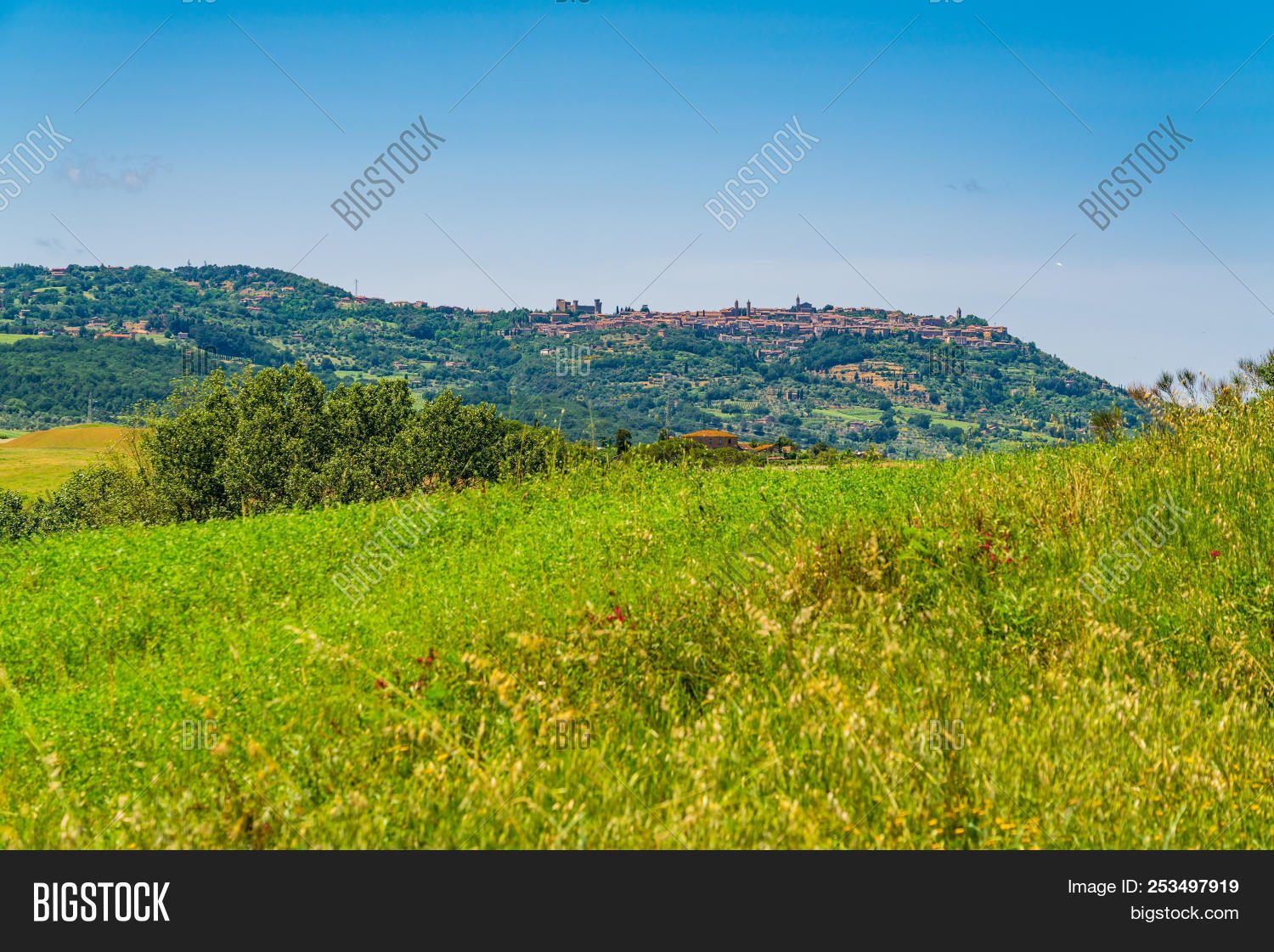 landscape of hilly tuscany with the field of flowers and the agriculture attraction beautiful izmirmasajfo