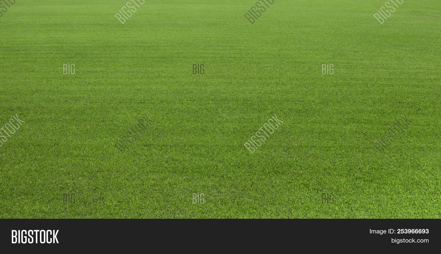 activity,aristocratic,backdrop,background,ball,beautiful,blade,blue,clean,club,copy,course,empty,field,football,fresh,freshness,game,golf,golfing,grass,green,greenery,grounds,grow,growth,land,landscape,lawn,leisure,lifestyle,meadow,nature,outdoor,pattern,perfection,person,plant,play,player,putting,recreation,recreational,space,sport,text,texture