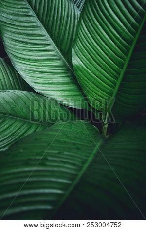 Green Leaf Background Dark Green Leaves Green Leaf Background Dark Green Leaves