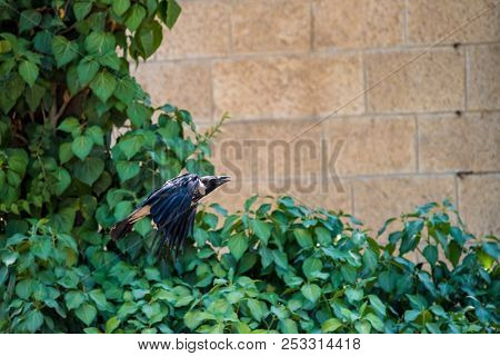 grey raven flying in wild fear wildlife free gothic stock photo