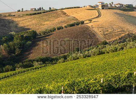 Panoramic view of olive groves, vineyards and farms on rolling hills of Abruzzo. Italy stock photo