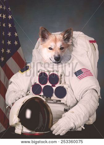 The Cosmonaut dog dressed in a space suit stock photo