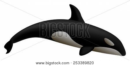 Orca whale mockup. Realistic illustration of orca whale mockup for web design isolated on white background stock photo
