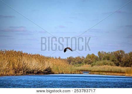 White-tailed eagle against the blue sky. Wild nature of Russia. Astrakhan Region. Russia stock photo