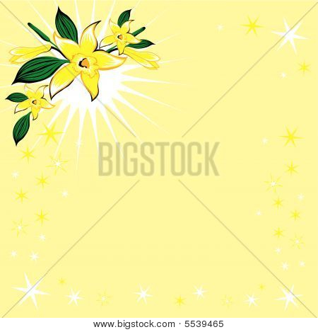 vector background with stars and vanilla flower stock photo