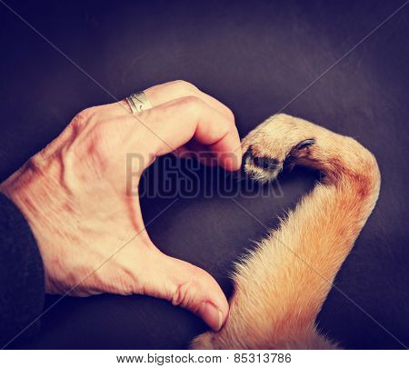 a person and a dog making a heart shape with the hand and paw toned with a retro vintage instagram f