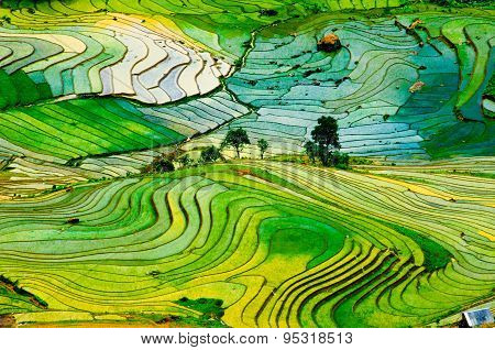 Terraced rice field in water season in Laocai province, Vietnam