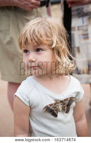 portrait of three years old blonde pretty child looking with beautiful tropical moth butterfly named Samia Ricini or Cynthia from Saturniidae family on her shirt stock photo