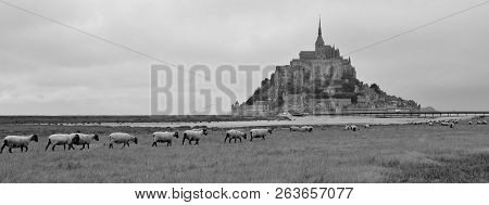 Sheep herd in front of Mont Saint Michel. Famous place in the Normandy, France. stock photo