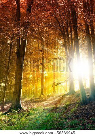 Scène de la forêt abstraite avec soleil