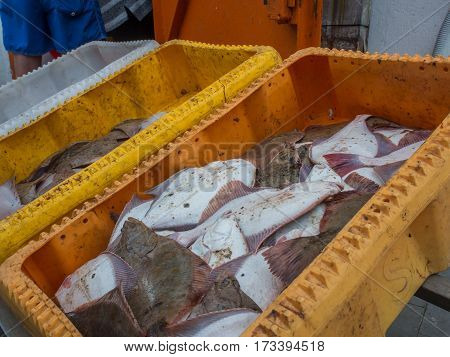 A freshly caught fish in yellow boxes in a fishing port stock photo