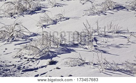 Winter snow scene close view of small bare branches and bushes on a snow covered patch along the highway to Miramichi, New Brunswick, covered in thick glittering ice and snow from a recent ice storm. Shot on a chilly bright blue sky sunny day in February. stock photo