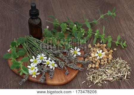 Calming and sleeping herb selection of chamomile, lavender, lemon balm and skullcap used in natural herbal medicine with essential oil bottle on oak background. stock photo