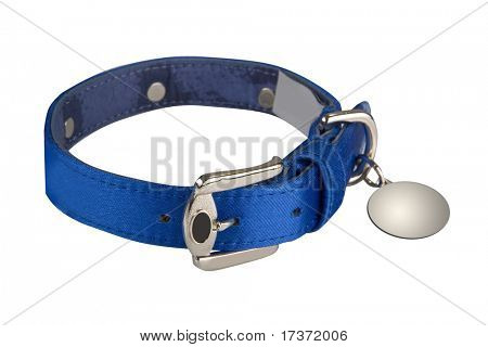 dog collar isolated stock photo