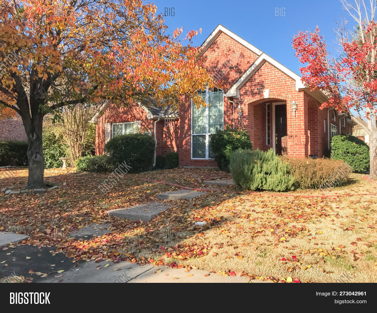 Typical single-family house near sidewalk in suburban Dallas, Texas, USA. Colorful fall foliage with thick carpet of Bradford Pear (Callery pear) leaves on tree and ground