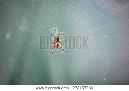 Spider spinning web in nature on blurred blue background. Arachnid, insect, animal. Web construction, design, geometry stock photo