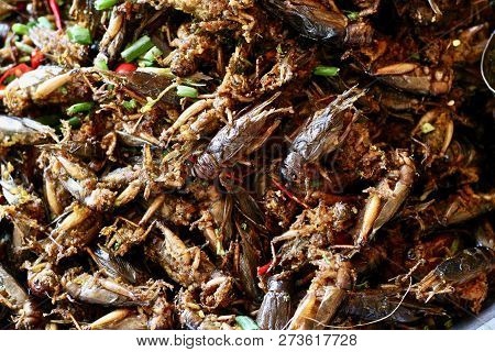 Deep fried crickets sold as a street food snack in Spider Town, Cambodia stock photo