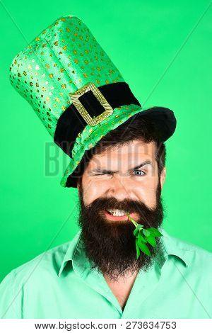 St Patrick's Day. Happy bearded man in leprechaun hat. Portrait of handsome man. Clover in mouth. Bearded leprechaun. Happy Irish leprechaun with black beard. Bearded man. stock photo