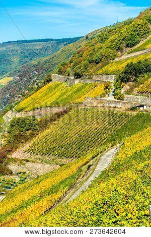 Rheingau vineyards at Assmannshausen in the Upper Middle Rhine Valley in autumn. Germany stock photo