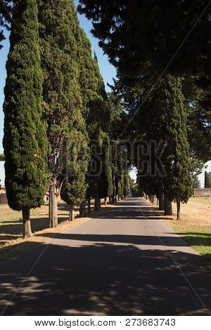 Along the ancient Roman road Via Appia Antica, a row of classic Italian Cypress trees line the path on a hot summer day, casting shadows stock photo
