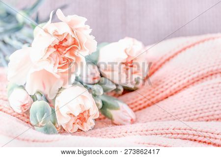 Soft pink carnation flowers on a light knitted background stock photo