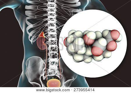 Aldosterone hormone, mineralocorticoid hormone produced by adrenals, 3D illustration stock photo