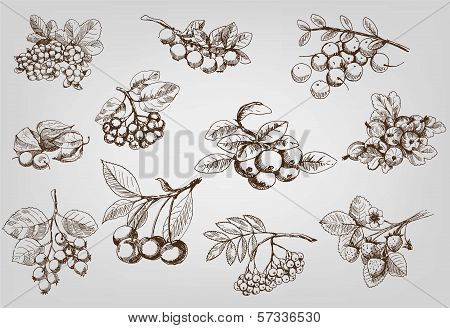 berry. set of vector sketches. This is file of EPS8 format. stock photo