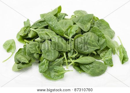 pile of  baby spinach leaves on white background stock photo