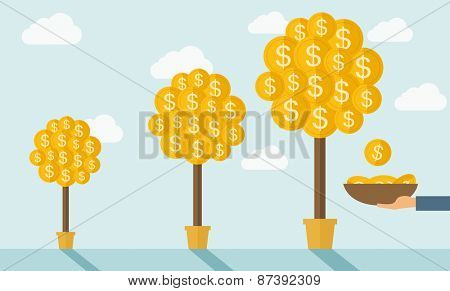 Three steps in growing a money dollar plant from small to bigger plant in a pot. Financial growth co