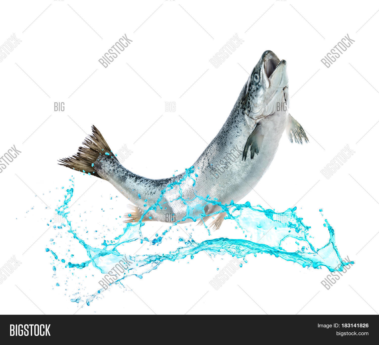 alaskan,angling,animal,atlantic,catch,chinook,close-up,closeup,coho,cooking,cuisine,fin,fish,fishing,flying,food,freshwater,hobbies,industry,isolated,jump,jumper,leisure,macro,mid-air,motion,move,nature,object,ocean,raw,refreshment,river,salmon,saltwater,scales,sea,seafood,sockeye,splash,splashing,sport,swim,tail,trout,underwater,water,wild,wildlife