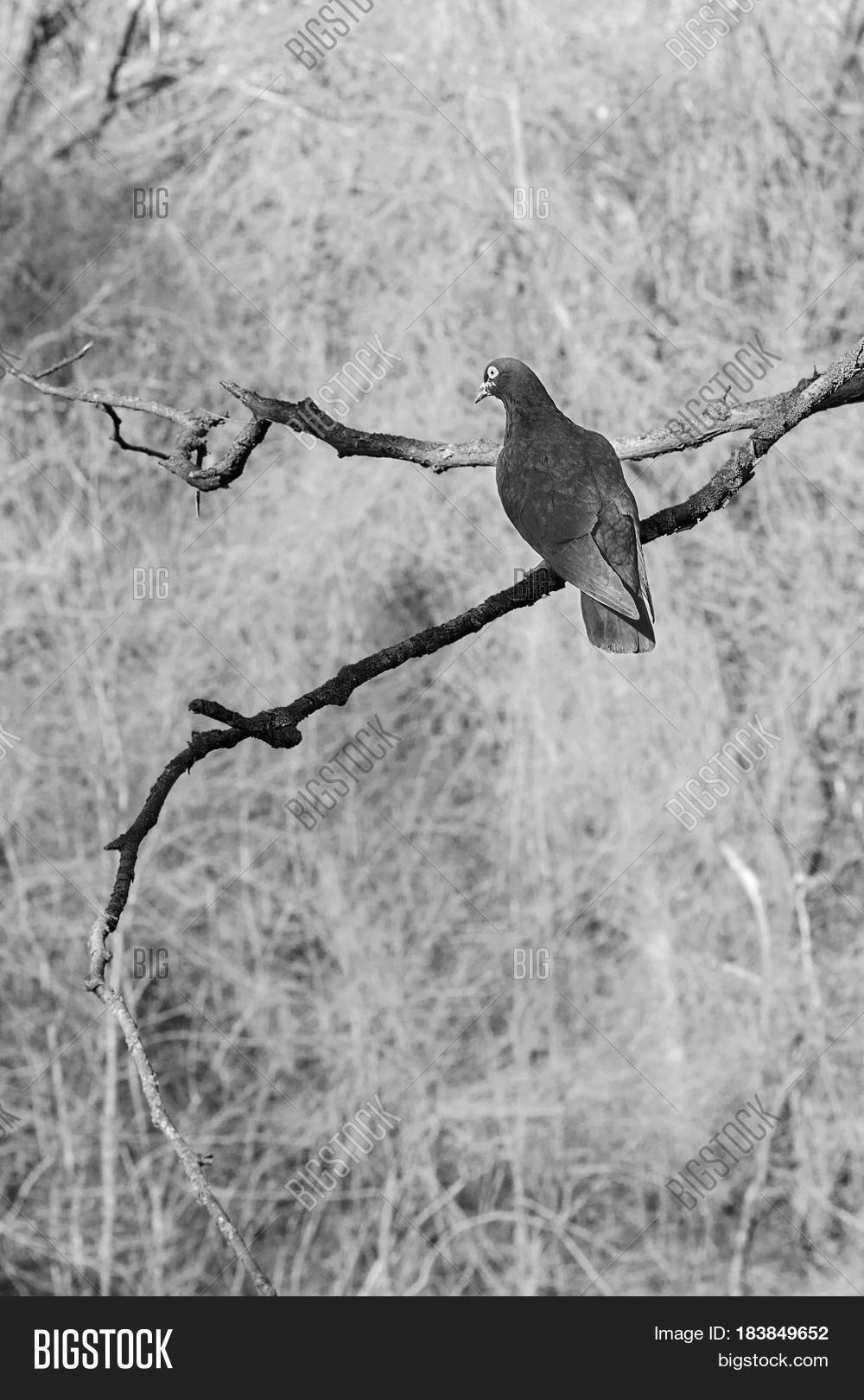 Appearance,Background,One,abandoned,animal,art,artistic,beak,bird,black,blue,branch,color,dark,dove,emptiness,feather,flight,free,gray,melancholy,nature,nobody,outdoors,poetic,portrait,romantic,sky,tree,unique,unpainted,white,wing