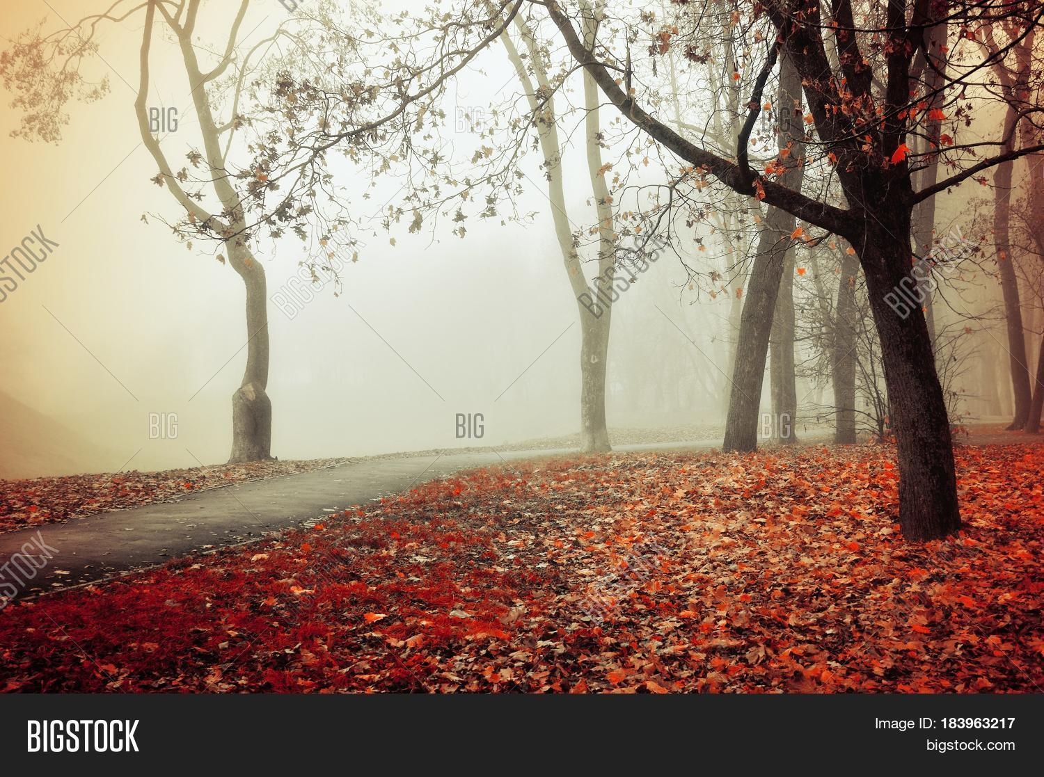 November,October,September,alley,autumn,background,bare,cloudy,dark,day,dense,dry,fallen,focus,fog,foggy,foliage,footpath,foreground,forest,gothic,grass,green,grove,landscape,leaves,lonely,mist,mysterious,mystery,nobody,panorama,park,path,place,processing,quiet,red,road,row,season,soft,somber,stunning,thick,tree,walkway,weather