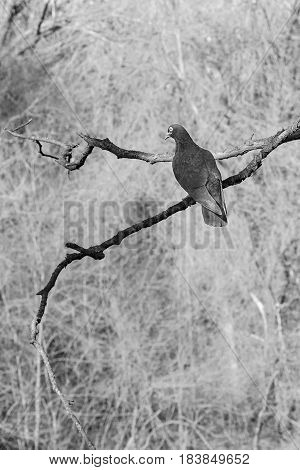 Beautiful poetical imagine of a dark dove on a branch and sky on the background in blur stock photo