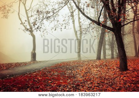 Autumn nature -misty park autumn view. Autumn park alley in dense fog - foggy autumn landscape with bare autumn trees and orange fallen leaves. Autumn alley in dense autumn fog. Soft filter applied. stock photo