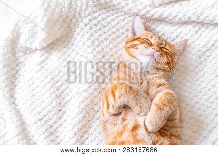 Ginger Cat Sleeping