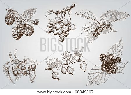 berry. set of six vector sketches handmade stock photo