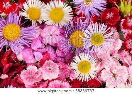 Background wildflowers