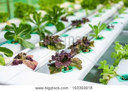 Small Rooftop Hydroponic Farming Soil-less sky farming Urban Gardening in Bangkok Thailand Hydroponics method of growing plants using mineral nutrient solutions in water without soil. stock photo