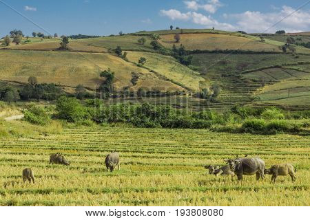 cultivated land fields landscaped near Kalaw Shan state in Myanmar (Burma) stock photo