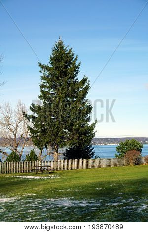 A pine tree stands at the edge of Sunset Park in Petoskey, Michigan, during November. stock photo
